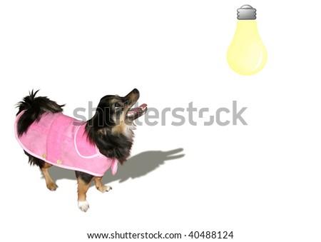 little black dog barks at a bulb