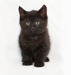 Little black kitten goes on gray background