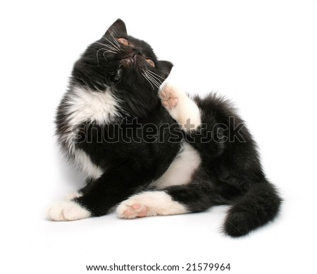 little black kitten isolated on white background - stock photo