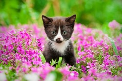 Little black kitten sitting in flowers