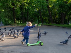 Little blonde girl carries a green scooter past a flock of pigeons. City park in the summer afternoon