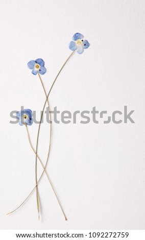 little blue pressed flowers
