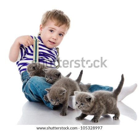 little boy and British kittens. isolated on white background