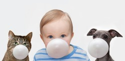 little boy, cat and dog makes a bubble from chewing gum