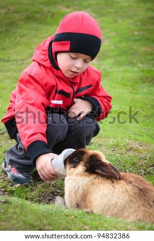Little boy feed a rabbit in farm