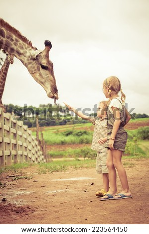 Little boy feeding a giraffe at the zoo at the day time. #223564450