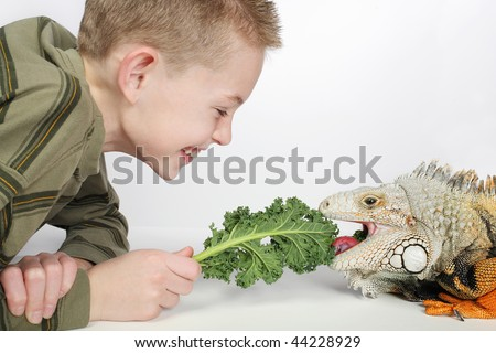 little boy feeding a large hungry pet lizard and laughing