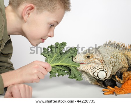 little boy feeding green leaf to large hungry pet lizard