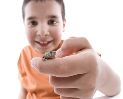 Little boy holding a small frog isolated on white background
