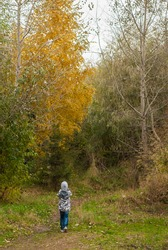 Little boy in autumn Park, the child goes on the trail in the woods, the beauty of the fall season, a happy childhood