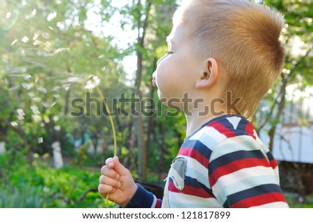 Little boy is blowing on dandelion. Sunlight effect.