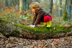 Little boy kid on a tree branch. Child climbs a tree