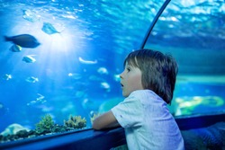 Little boy, kid watching the shoal of fish swimming in oceanarium, children enjoying underwater life in Aquarium