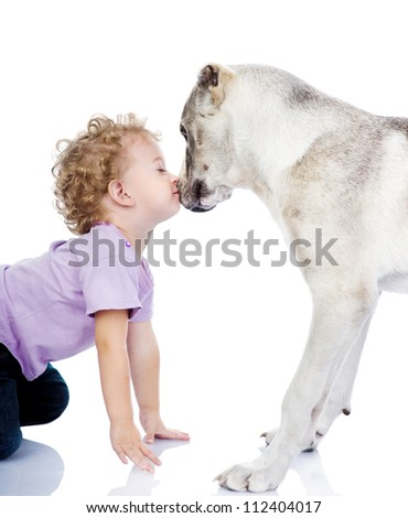 little boy kissing big dog. isolated on white background