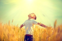 Little boy on a wheat field in the sunlight enjoying nature. Kid Raising hands over sunset sky background. Fresh air, environment concept