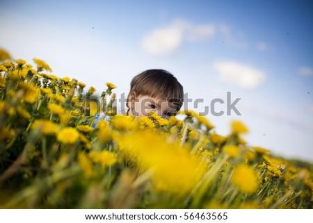 little boy playing hide-and-seek in the field of dandelions