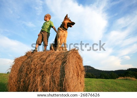 Little boy playing with the dog (Alsatian) on the meadow - summer in the country during summer holidays