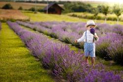 Little boy walking on a lavender field. In a stylish hat.