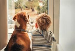 little boy with best friend looking through window