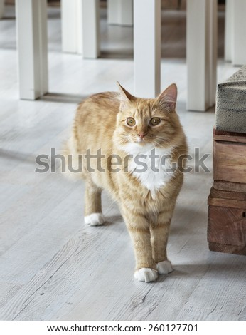 Little brown cat in animal shelter, curious cat, sad cat in blurry background, brown cat