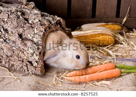 Little brown easter bunny finding delicious carrots