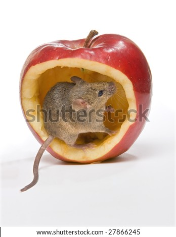 Little brown mouse sitting in a big red apple