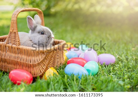 Little bunny and eggs in Basket on spring green grass. Cute rabbit. Easter egg hunt with pet bunny. Happy Easter greeting card with copyspace. Sunbeams