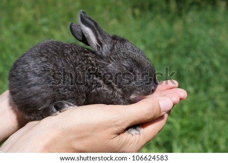 Little Bunny on the open hands of man, against the background of green grass - stock photo