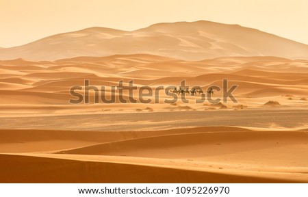 little caravan riding by desert between dune in Morocco