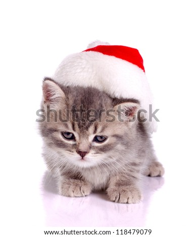 little cat celebrating  christmas in red hat isolated on white