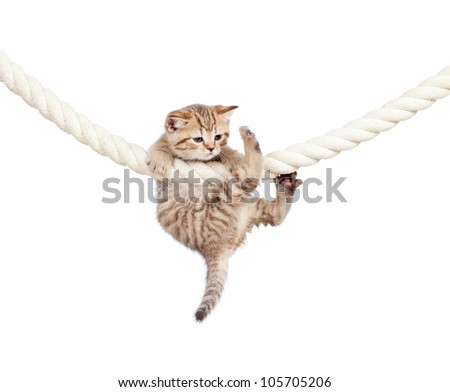 little cat clutching at rope isolated on white background - stock photo