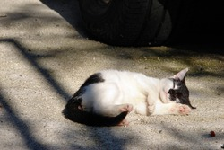 Little Cat is pulled on Road Near the Parked Car Look Like Stewed. Dangers for Cats.