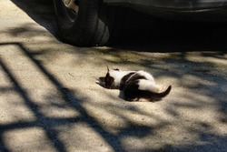 Little Cat is Pulled on the Road Near the Car. Look Like Stewed. Dangers for Cats.