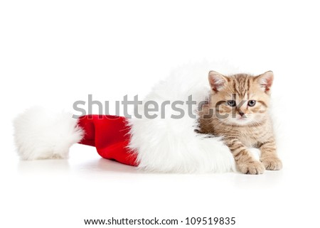 little cat kitten in a Christmas santa claus hat on a white background