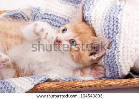 little cat lying in the wool