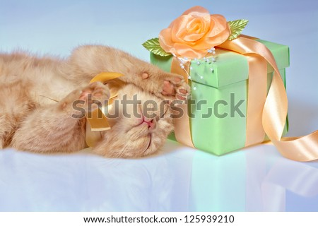 Little cat lying near box with gift