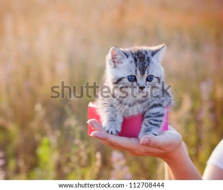 little cat outdoor