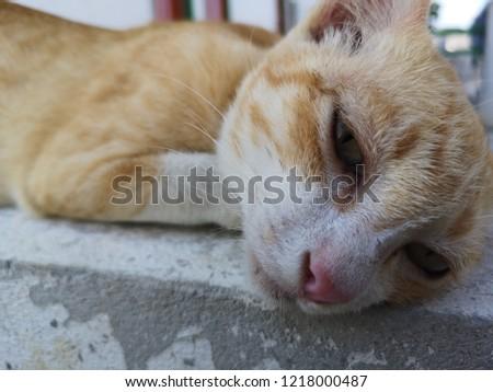 Little cat playful playful playful #1218000487