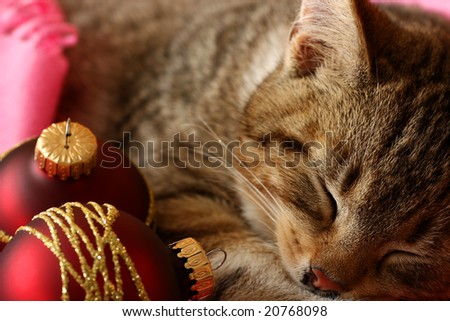Little cat sleeping with xmas balls