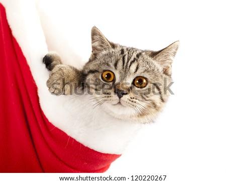 Little cat wearing Santa's hat