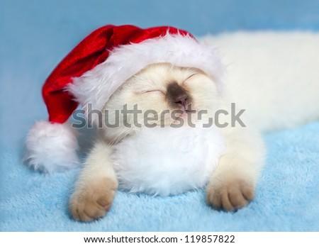 Little cat wearing Santa's hat sleeping on pompom
