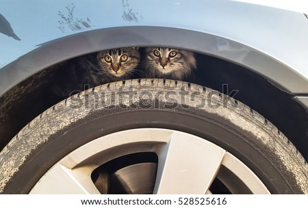 little cats hidden over car wheel