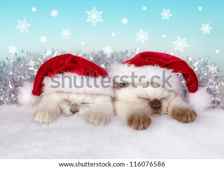 Little cats wearing Santa's hat sleeping