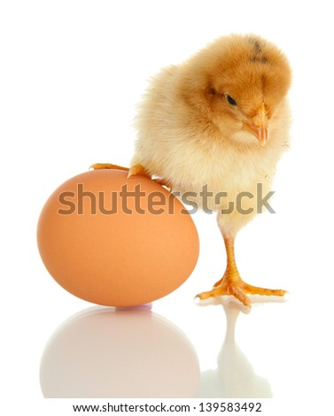 Little chicken with egg  isolated on white