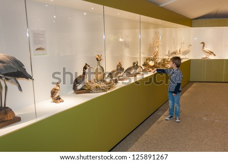 Little child in museum pointing at birds on display in a cabinet