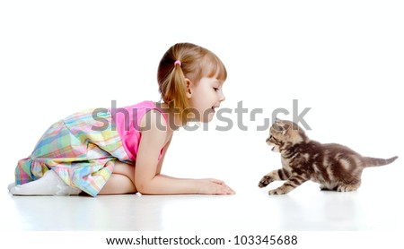 little child playing Scottish kitten - stock photo