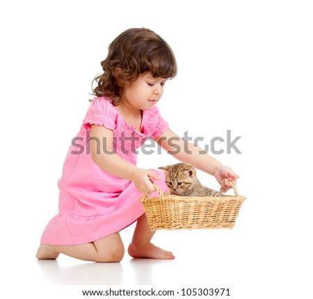 little child playing with Scottish kitten