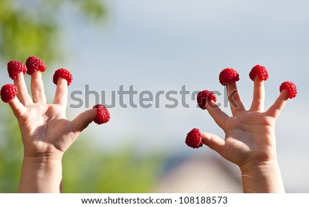 Little child's hands with raspberries on fingers