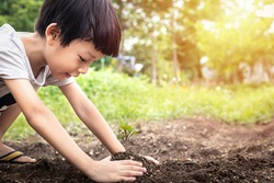 Little child were planting seedling on soil. Asian boy planting young tree.