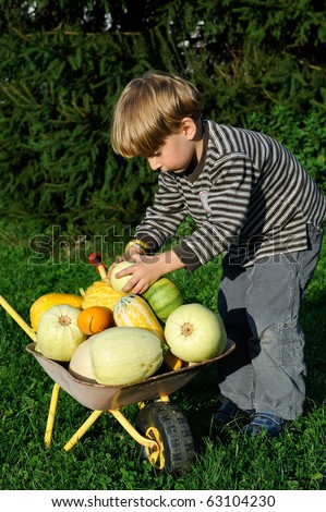 little child with a wheelbarrow full with pumpkin crop - helping in a garden